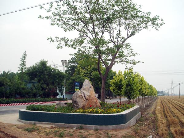 农村门口花坛设计图片